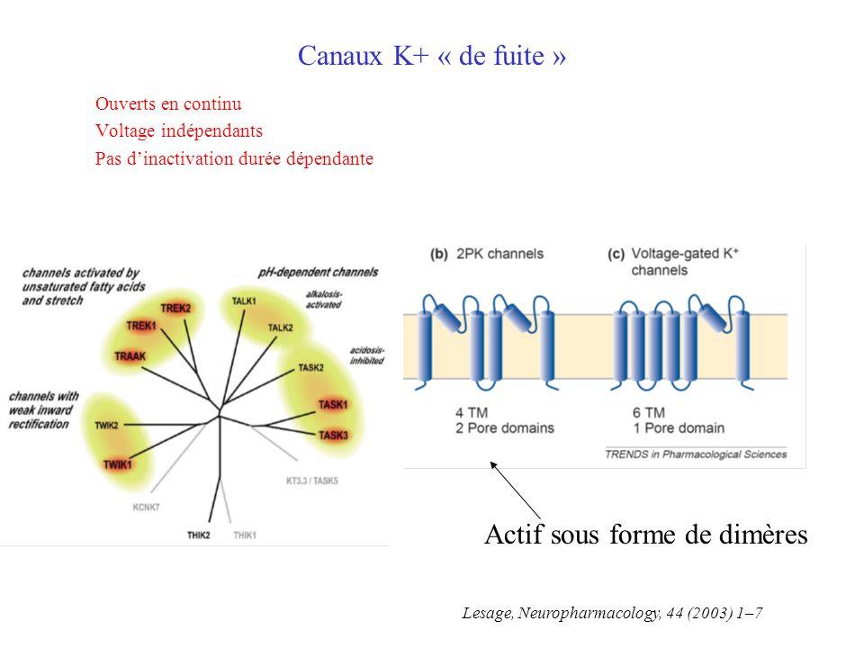 Canaux K+ « de fuite » Ouverts en continu Voltage indépendants Pas dinactivation durée dépendante Actif sous forme de dimères Lesage, Neuropharmacology, 44 (2003) 1–7