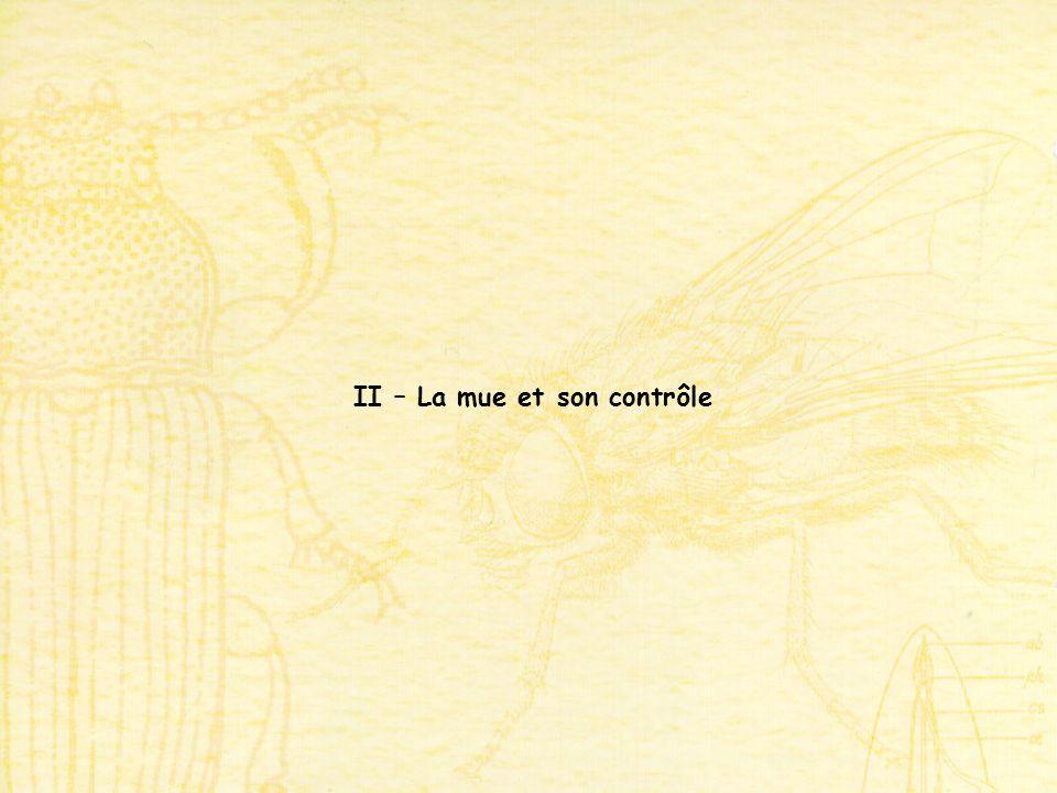 II – La mue et son contrôle