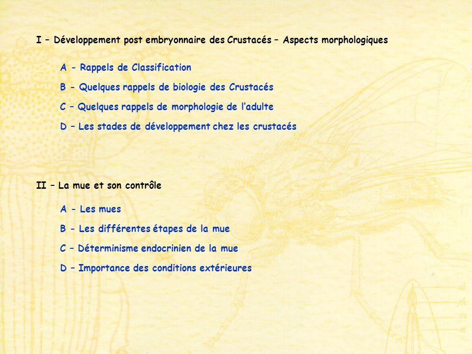 A - Les mues II – La mue et son contrôle B - Les différentes étapes de la mue C – Déterminisme endocrinien de la mue D – Importance des conditions extérieures I – Développement post embryonnaire des Crustacés – Aspects morphologiques A - Rappels de Classification B - Quelques rappels de biologie des Crustacés C – Quelques rappels de morphologie de ladulte D – Les stades de développement chez les crustacés
