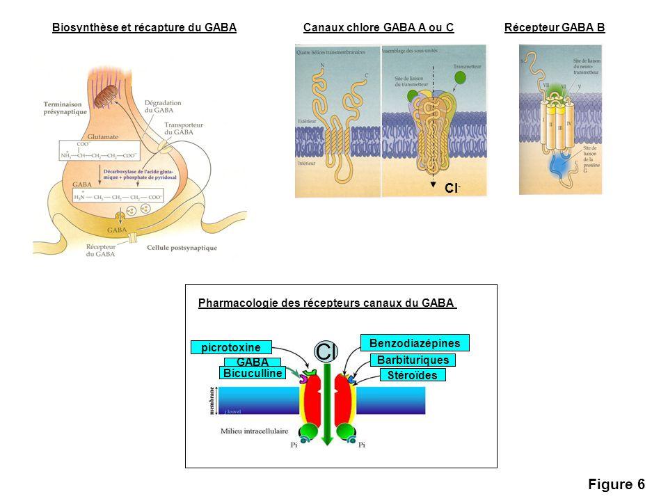Biosynthèse et récapture du GABACanaux chlore GABA A ou CRécepteur GABA B Cl - Pharmacologie des récepteurs canaux du GABA Benzodiazépines Barbituriqu