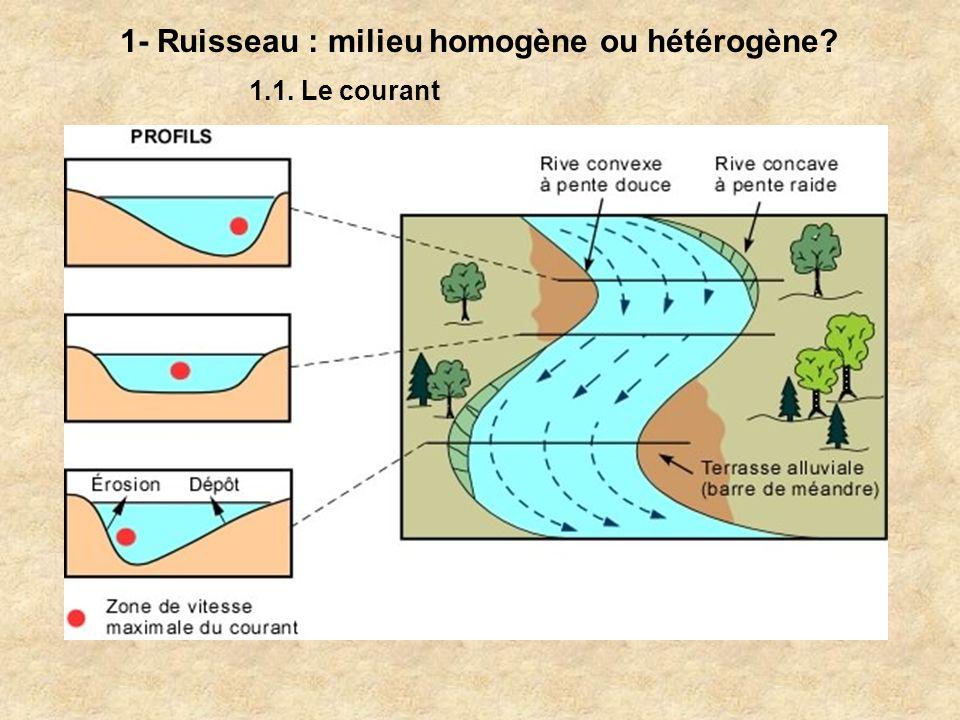 1- Ruisseau : milieu homogène ou hétérogène? 1.1. Le courant