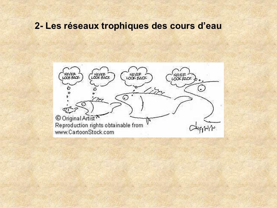 2- Les réseaux trophiques des cours deau