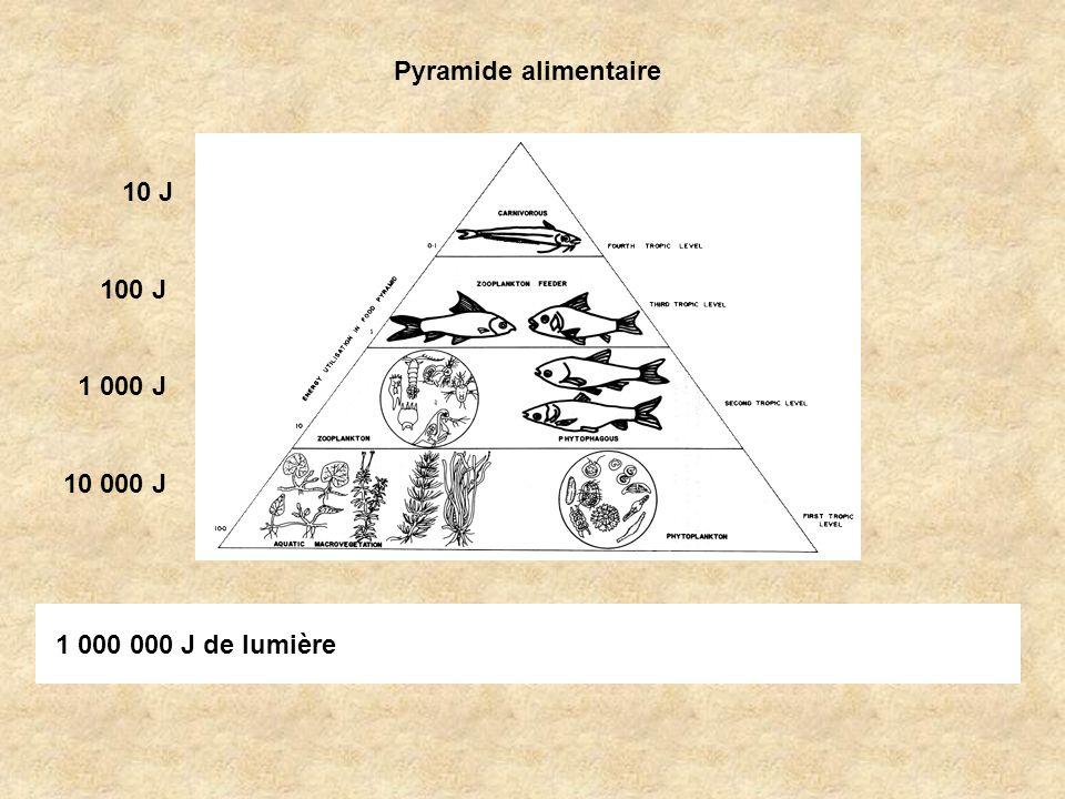 Pyramide alimentaire 1 000 000 J de lumière 10 000 J 1 000 J 100 J 10 J