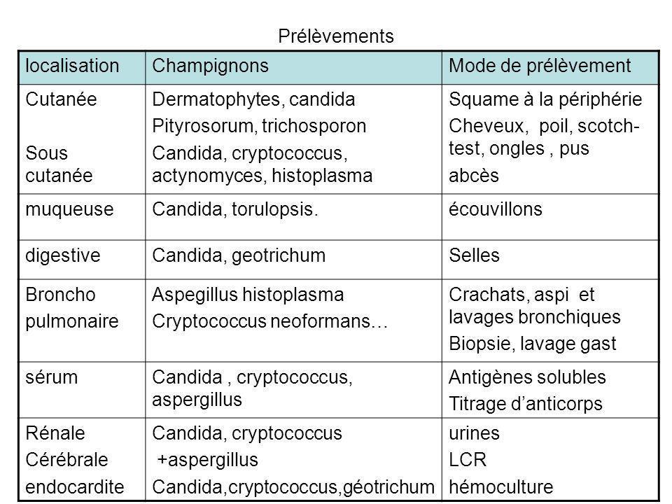 Prélèvements localisationChampignonsMode de prélèvement Cutanée Sous cutanée Dermatophytes, candida Pityrosorum, trichosporon Candida, cryptococcus, a