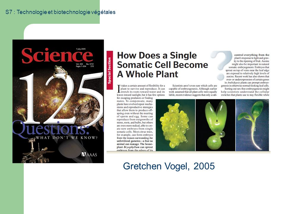 S7 : Technologie et biotechnologie végétales Gretchen Vogel, 2005
