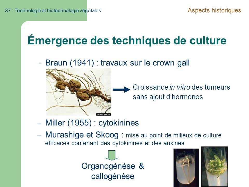 S7 : Technologie et biotechnologie végétales Émergence des techniques de culture – Braun (1941) : travaux sur le crown gall – Miller (1955) : cytokini