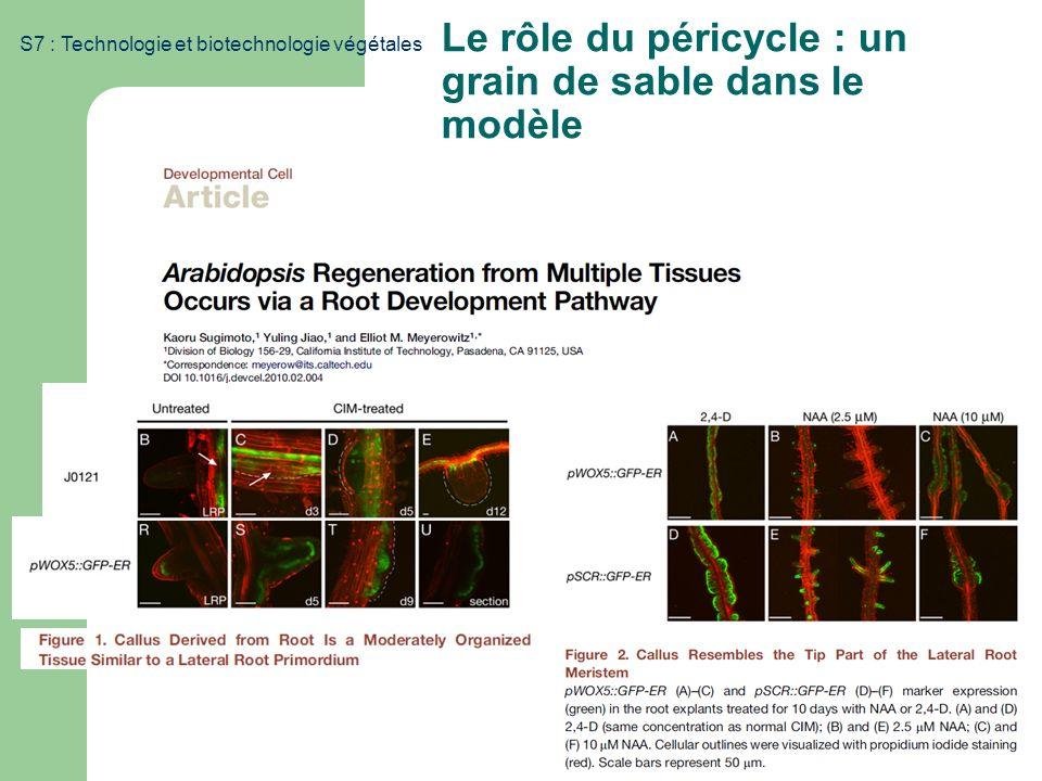 S7 : Technologie et biotechnologie végétales Le rôle du péricycle : un grain de sable dans le modèle