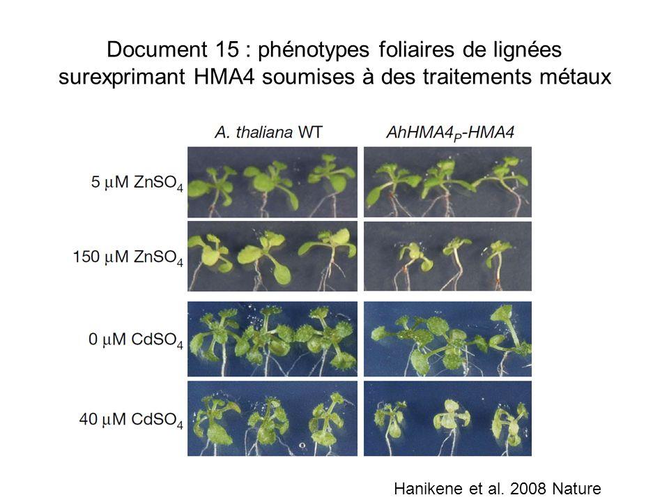 Document 15 : phénotypes foliaires de lignées surexprimant HMA4 soumises à des traitements métaux Hanikene et al. 2008 Nature