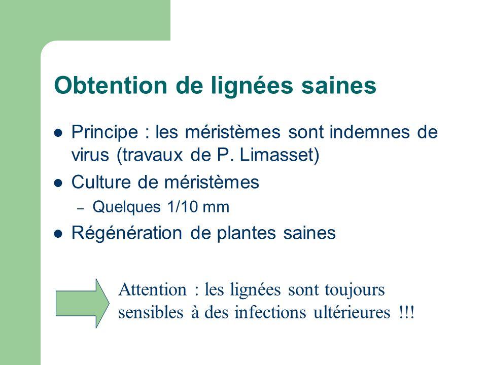 Obtention de lignées saines Principe : les méristèmes sont indemnes de virus (travaux de P. Limasset) Culture de méristèmes – Quelques 1/10 mm Régénér
