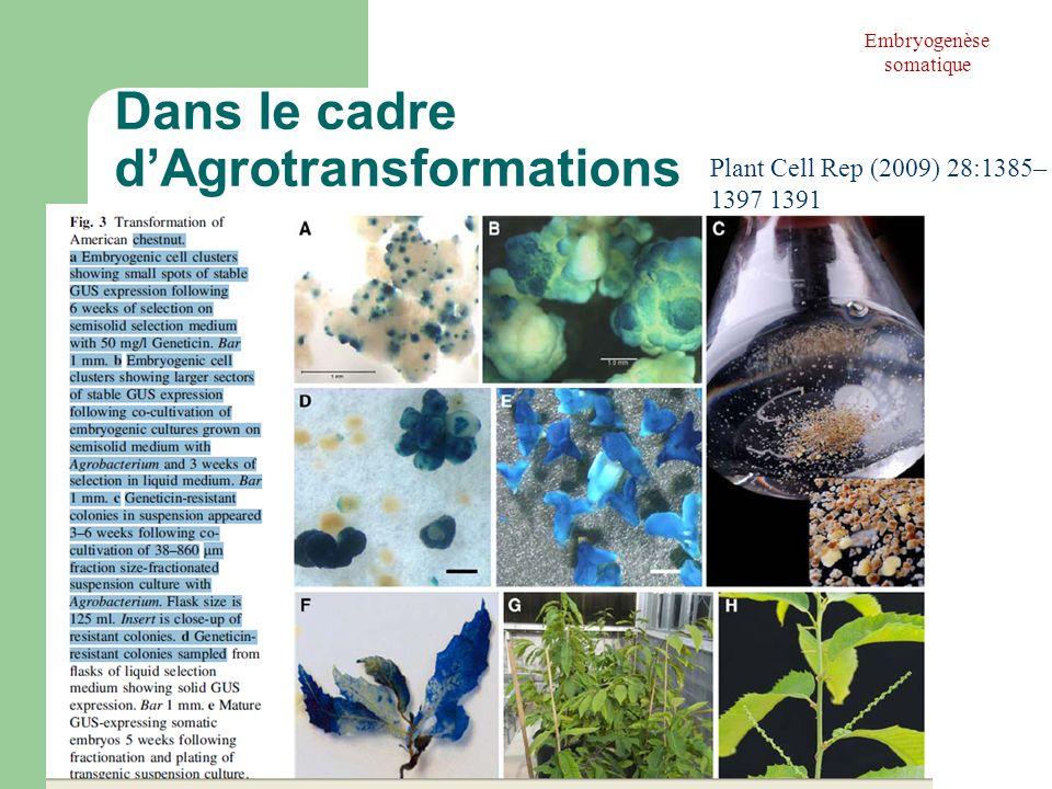 Dans le cadre dAgrotransformations Embryogenèse somatique Plant Cell Rep (2009) 28:1385– 1397 1391