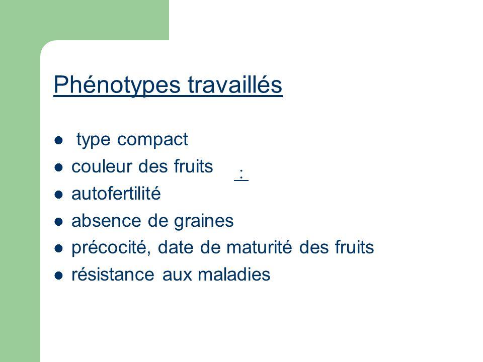 Phénotypes travaillés type compact couleur des fruits autofertilité absence de graines précocité, date de maturité des fruits résistance aux maladies
