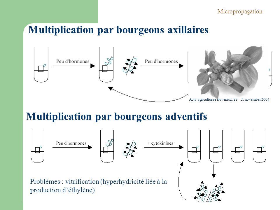 Multiplication par bourgeons axillaires Multiplication par bourgeons adventifs Problèmes : vitrification (hyperhydricité liée à la production déthylèn