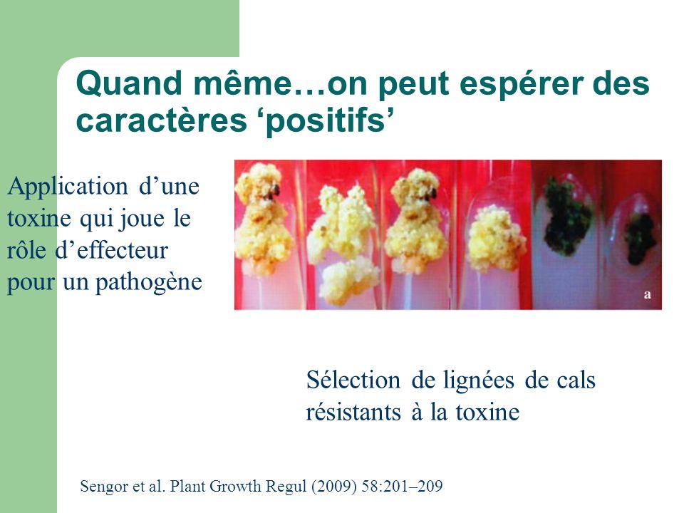 Quand même…on peut espérer des caractères positifs Application dune toxine qui joue le rôle deffecteur pour un pathogène Sélection de lignées de cals