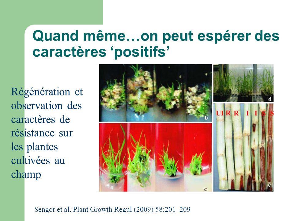 Quand même…on peut espérer des caractères positifs Régénération et observation des caractères de résistance sur les plantes cultivées au champ Sengor