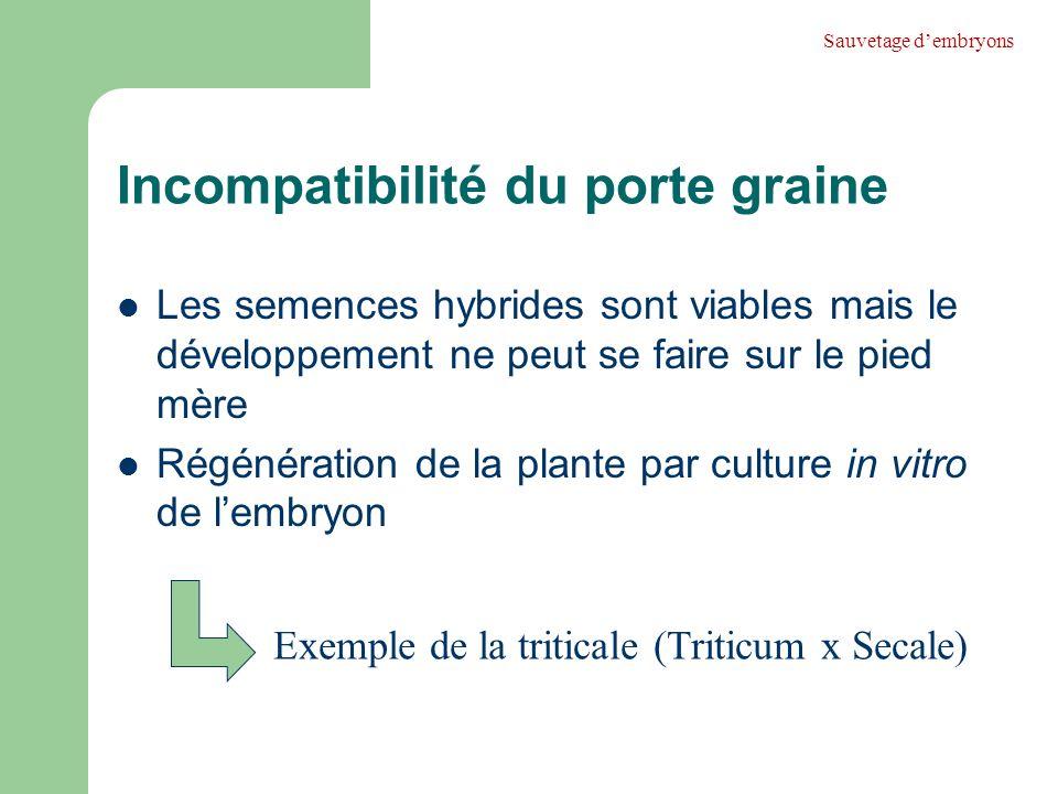 Incompatibilité du porte graine Les semences hybrides sont viables mais le développement ne peut se faire sur le pied mère Régénération de la plante p