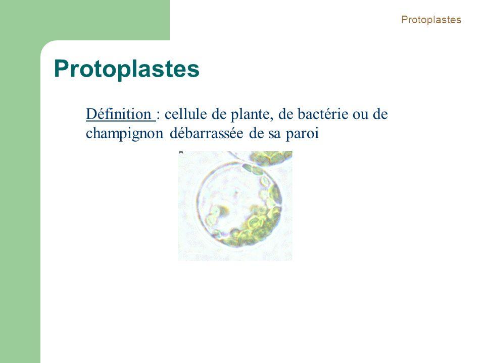 Protoplastes Définition : cellule de plante, de bactérie ou de champignon débarrassée de sa paroi Protoplastes