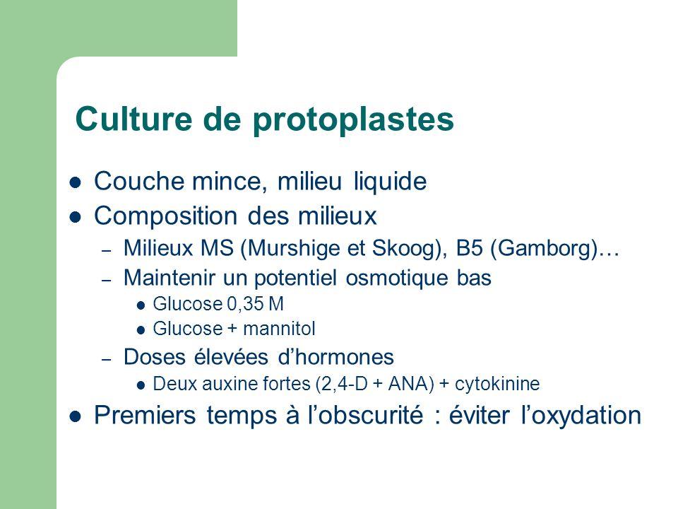 Culture de protoplastes Couche mince, milieu liquide Composition des milieux – Milieux MS (Murshige et Skoog), B5 (Gamborg)… – Maintenir un potentiel