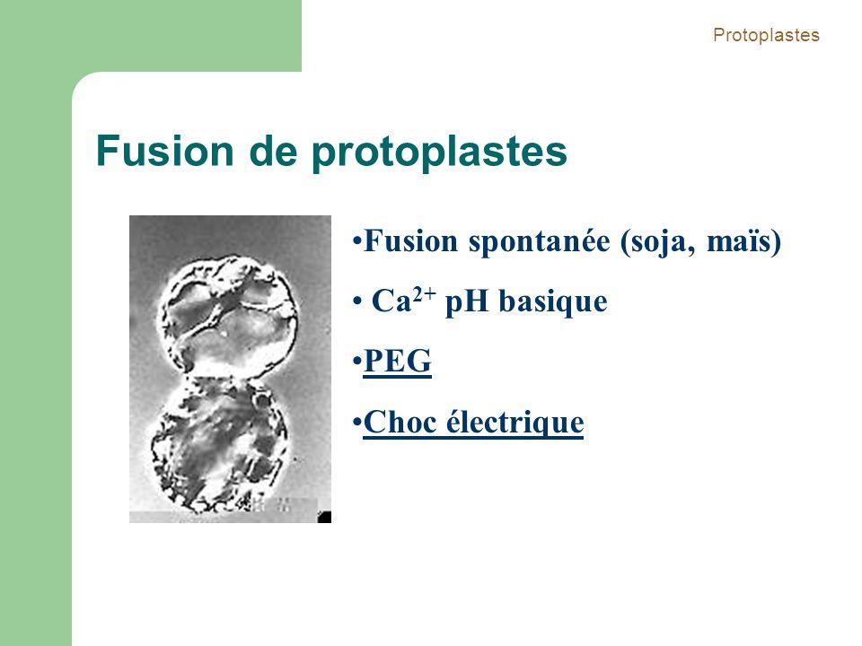 Fusion de protoplastes Fusion spontanée (soja, maïs) Ca 2+ pH basique PEG Choc électrique Protoplastes