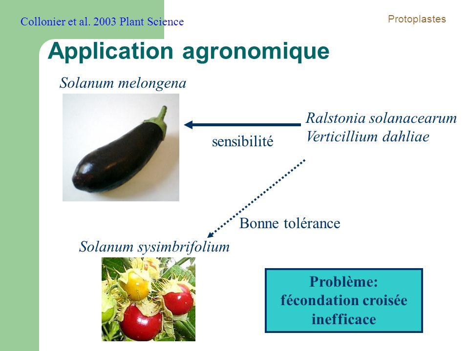 Solanum melongena Solanum sysimbrifolium Ralstonia solanacearum Verticillium dahliae sensibilité Bonne tolérance Problème: fécondation croisée ineffic