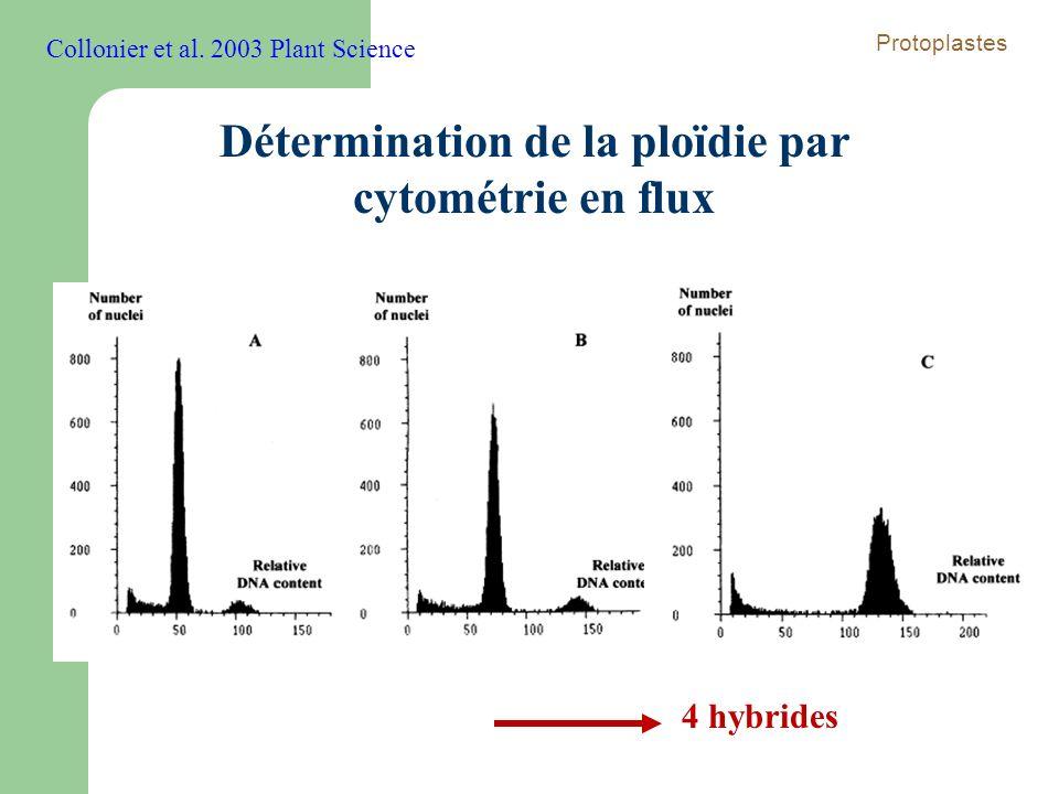 Détermination de la ploïdie par cytométrie en flux 4 hybrides Collonier et al. 2003 Plant Science Protoplastes