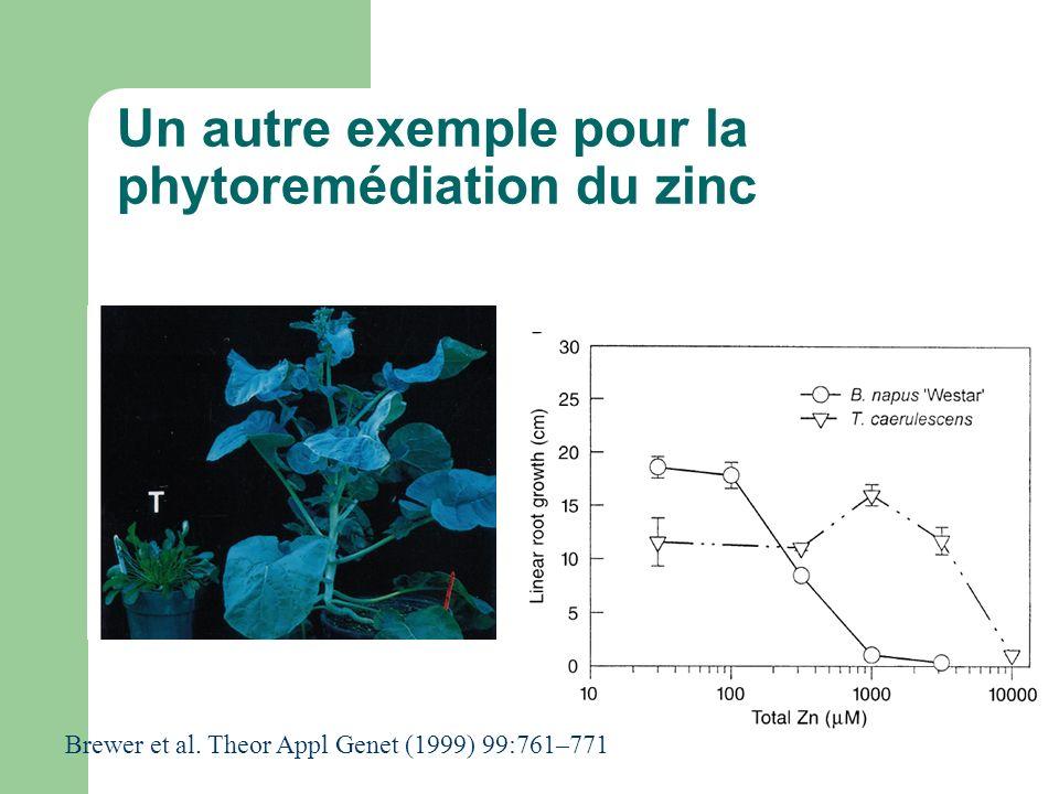 Un autre exemple pour la phytoremédiation du zinc Brewer et al. Theor Appl Genet (1999) 99:761–771