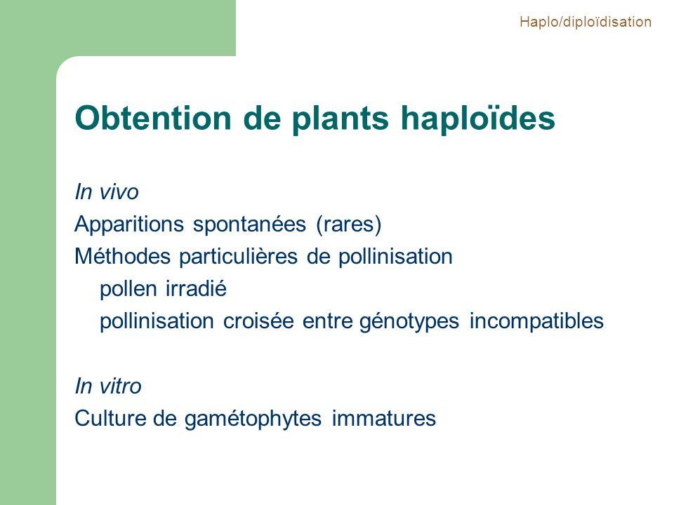 Obtention de plants haploïdes In vivo Apparitions spontanées (rares) Méthodes particulières de pollinisation pollen irradié pollinisation croisée entr
