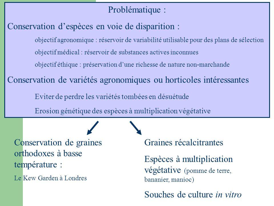 Problématique : Conservation despèces en voie de disparition : objectif agronomique : réservoir de variabilité utilisable pour des plans de sélection