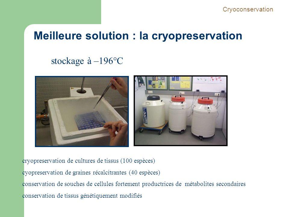 stockage à –196°C cryopreservation de cultures de tissus (100 espèces) cyopreservation de graines récalcitrantes (40 espèces) conservation de souches