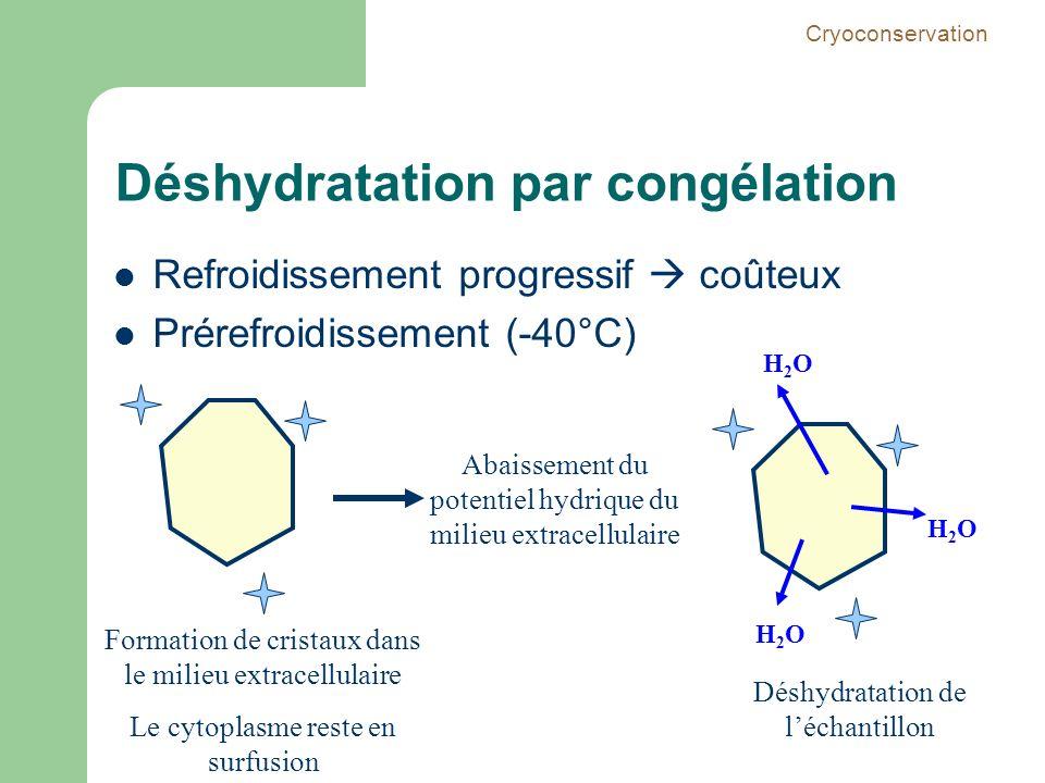Déshydratation par congélation Refroidissement progressif coûteux Prérefroidissement (-40°C) Formation de cristaux dans le milieu extracellulaire Le c