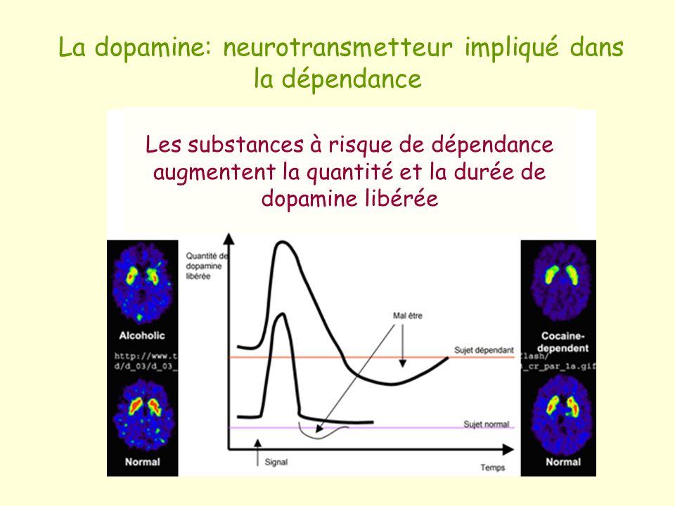 La dopamine: neurotransmetteur impliqué dans la dépendance Les substances à risque de dépendance augmentent la quantité et la durée de dopamine libéré