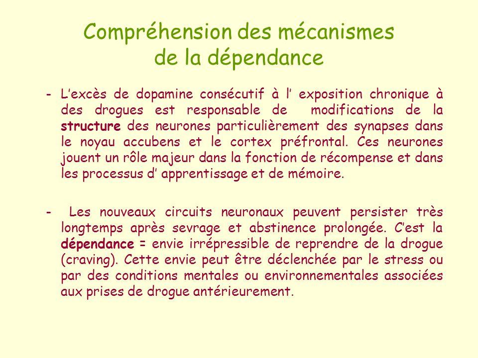 Compréhension des mécanismes de la dépendance -Lexcès de dopamine consécutif à l exposition chronique à des drogues est responsable de modifications d