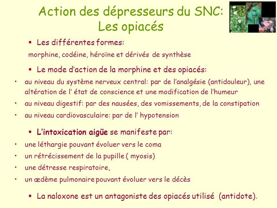 Action des dépresseurs du SNC: Les opiacés Les différentes formes: morphine, codéine, héroïne et dérivés de synthèse Le mode daction de la morphine et