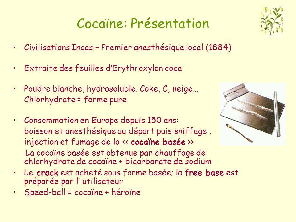Cocaïne: Présentation Civilisations Incas – Premier anesthésique local (1884) Extraite des feuilles dErythroxylon coca Poudre blanche, hydrosoluble. C