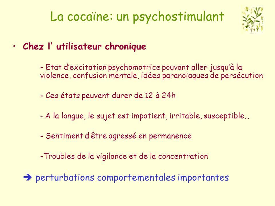 La cocaïne: un psychostimulant Chez l utilisateur chronique - Etat dexcitation psychomotrice pouvant aller jusquà la violence, confusion mentale, idée