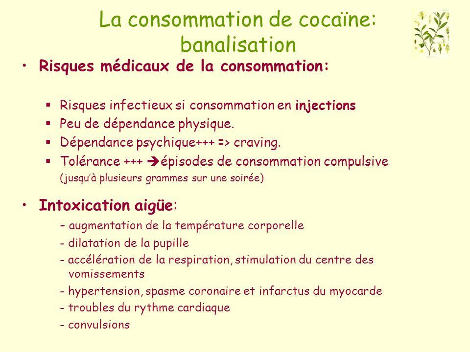 La consommation de cocaïne: banalisation Risques médicaux de la consommation: Risques infectieux si consommation en injections Peu de dépendance physi