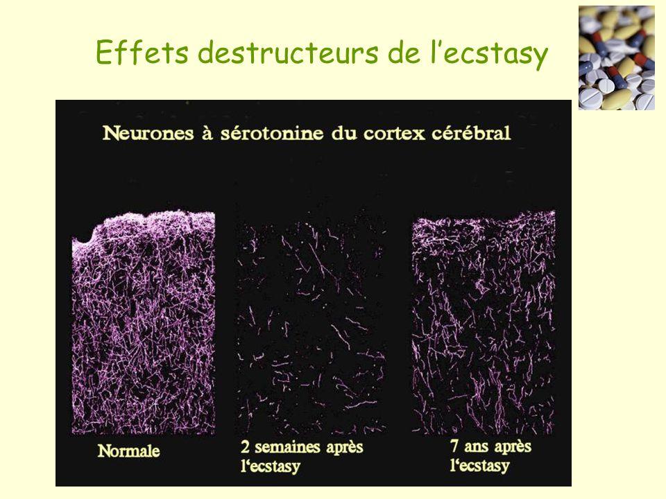Effets destructeurs de lecstasy