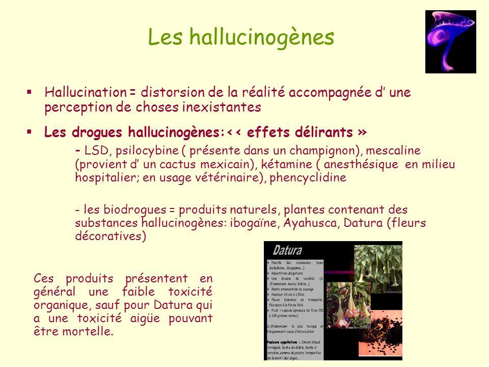 Les hallucinogènes Hallucination = distorsion de la réalité accompagnée d une perception de choses inexistantes Les drogues hallucinogènes:<< effets d