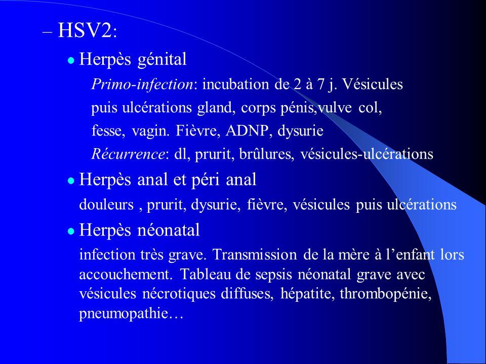 – HSV2 : Herpès génital Primo-infection: incubation de 2 à 7 j. Vésicules puis ulcérations gland, corps pénis,vulve col, fesse, vagin. Fièvre, ADNP, d