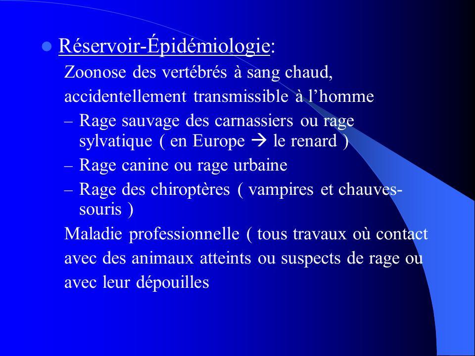 Réservoir-Épidémiologie: Zoonose des vertébrés à sang chaud, accidentellement transmissible à lhomme – Rage sauvage des carnassiers ou rage sylvatique