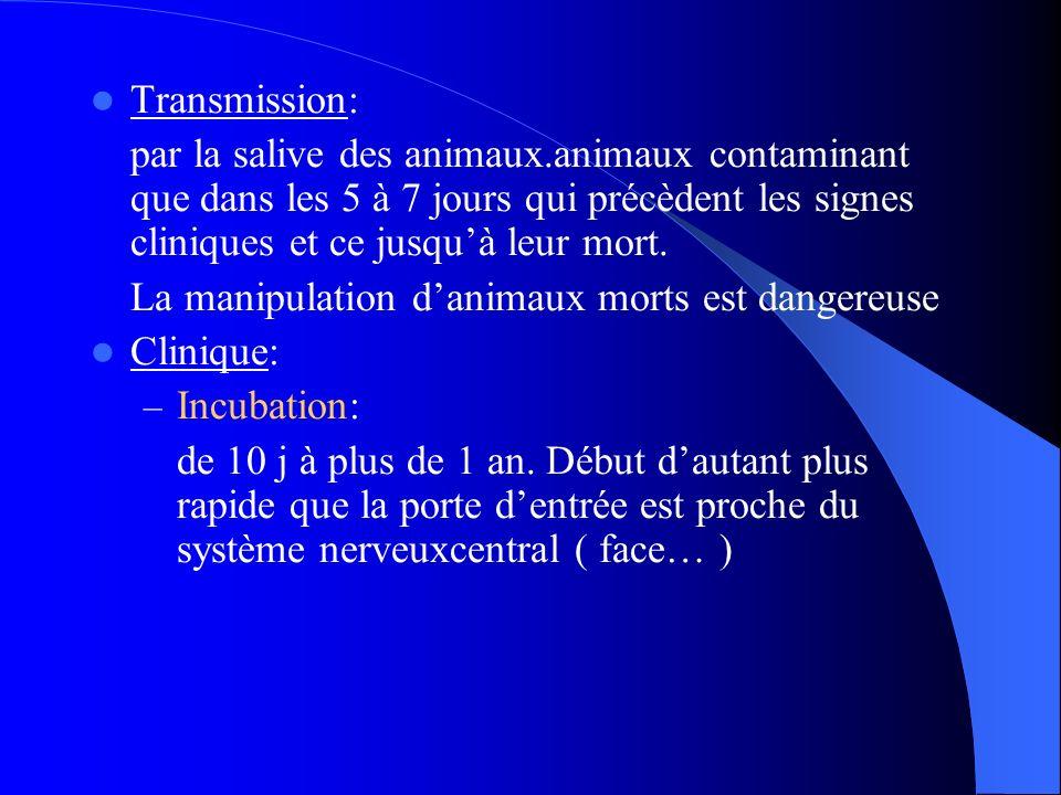 Transmission: par la salive des animaux.animaux contaminant que dans les 5 à 7 jours qui précèdent les signes cliniques et ce jusquà leur mort. La man