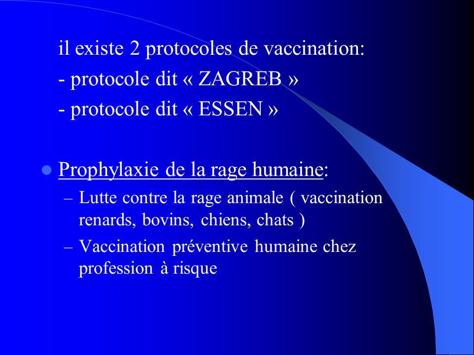 il existe 2 protocoles de vaccination: - protocole dit « ZAGREB » - protocole dit « ESSEN » Prophylaxie de la rage humaine: – Lutte contre la rage ani