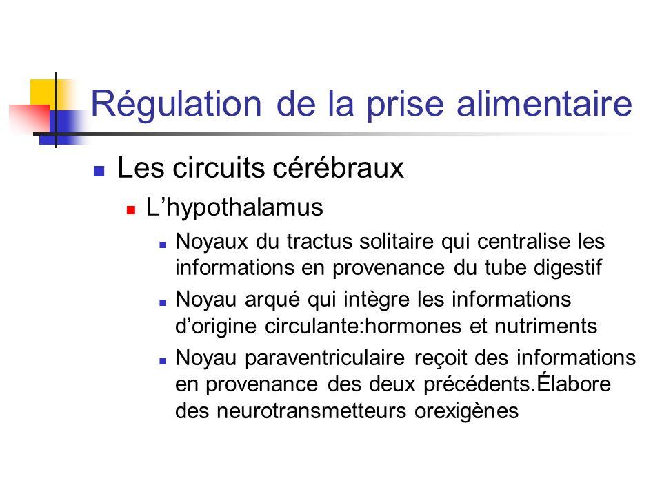 Régulation de la prise alimentaire Les circuits cérébraux Lhypothalamus Noyaux du tractus solitaire qui centralise les informations en provenance du t