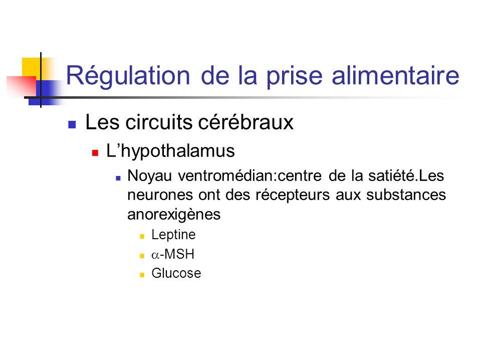 Régulation de la prise alimentaire Les circuits cérébraux Lhypothalamus Noyau ventromédian:centre de la satiété.Les neurones ont des récepteurs aux su