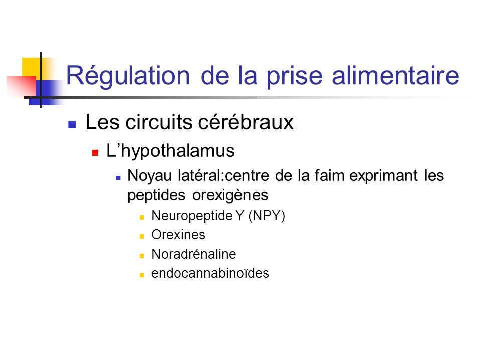 Régulation de la prise alimentaire Les circuits cérébraux Lhypothalamus Noyau latéral:centre de la faim exprimant les peptides orexigènes Neuropeptide