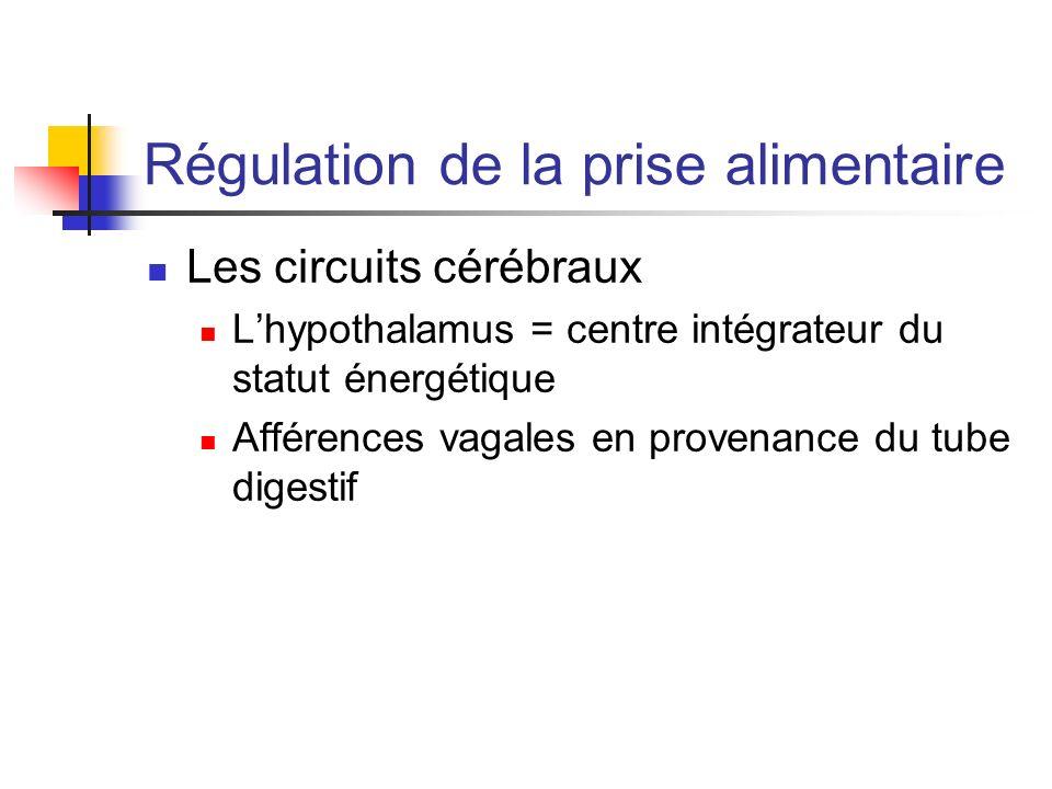 Régulation de la prise alimentaire Les circuits cérébraux Lhypothalamus = centre intégrateur du statut énergétique Afférences vagales en provenance du