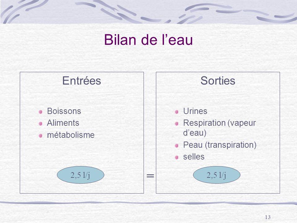 13 Bilan de leau Entrées Boissons Aliments métabolisme Sorties Urines Respiration (vapeur deau) Peau (transpiration) selles 2,5 l/j =
