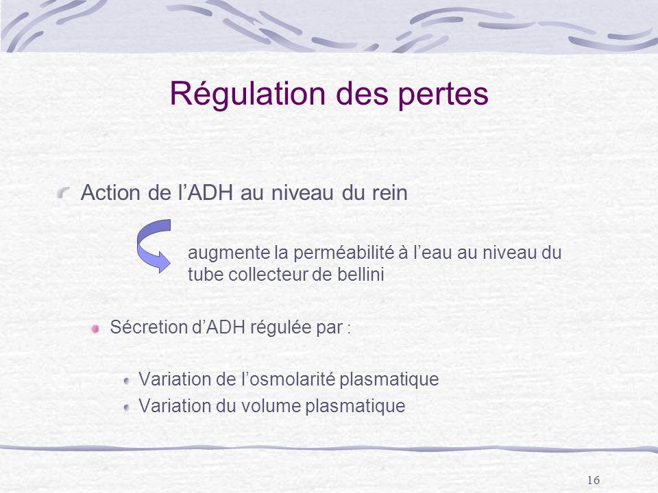 16 Régulation des pertes Action de lADH au niveau du rein augmente la perméabilité à leau au niveau du tube collecteur de bellini Sécretion dADH régul