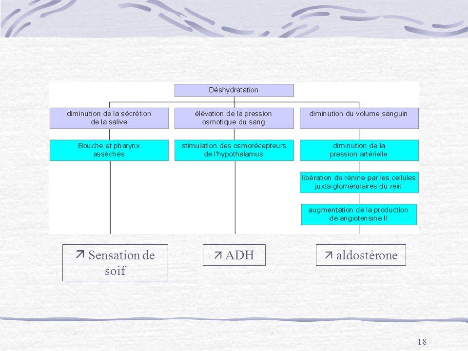 18 Sensation de soif ADH aldostérone