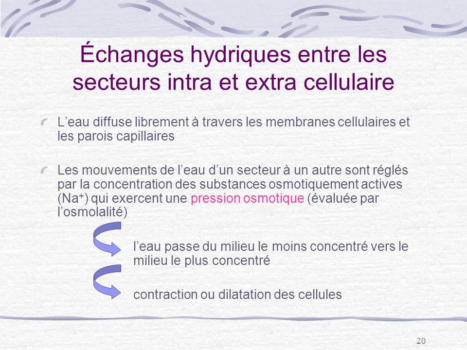 20 Échanges hydriques entre les secteurs intra et extra cellulaire Leau diffuse librement à travers les membranes cellulaires et les parois capillaire