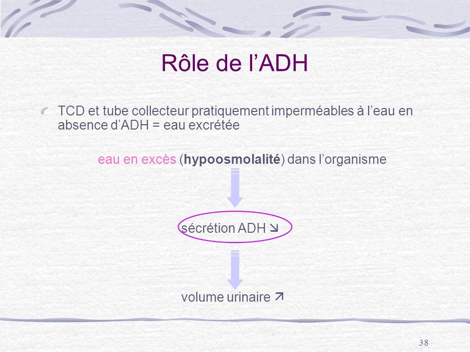 38 Rôle de lADH TCD et tube collecteur pratiquement imperméables à leau en absence dADH = eau excrétée eau en excès (hypoosmolalité) dans lorganisme s
